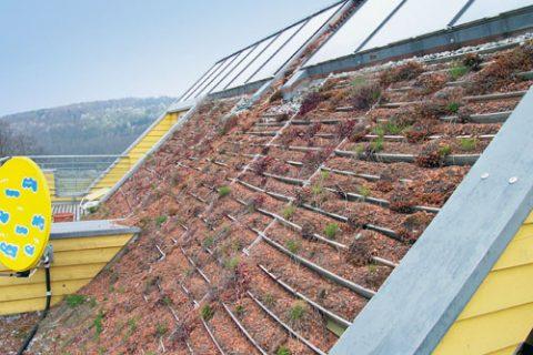 Schäden an begrünten Steildächern