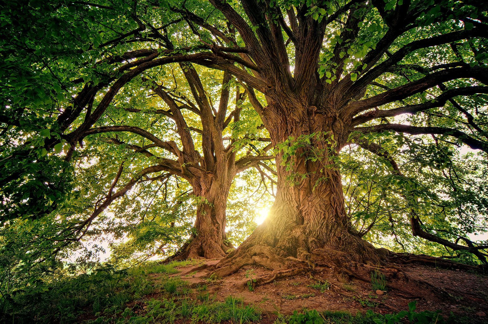 Sonnestrahlen scheinen durch den grünen Wald