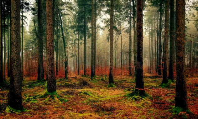 Preissteigerung Holz Holzbau Baden