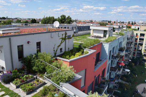 Vielfacher Nutzen  durch Dachbegrünung